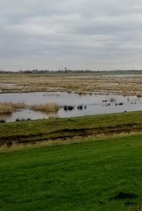polderlandschap2_300
